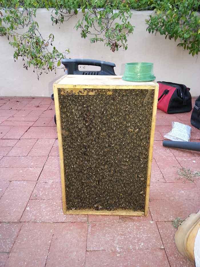 Bee Removal La Jolla CA | D-Tek Live Bee Removal