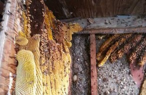 Bee Hive Removal Encinitas