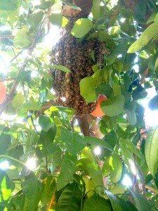 Beehive Orange County