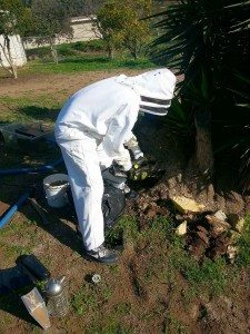 Expert Bee Removal San Diego