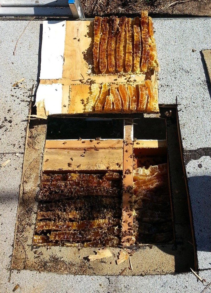 Bee Removal Carlsbad