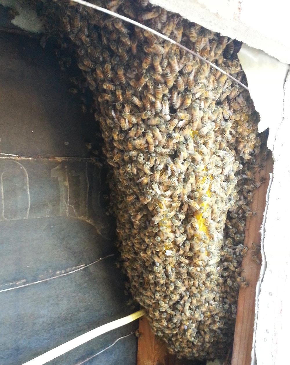Fallbrook Bee Removal Services | D-Tek Live Bee Removal