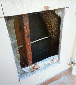 Bee removal Solana Beach CA