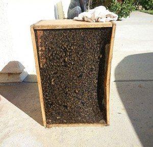 Beehive Removal Coronado CA
