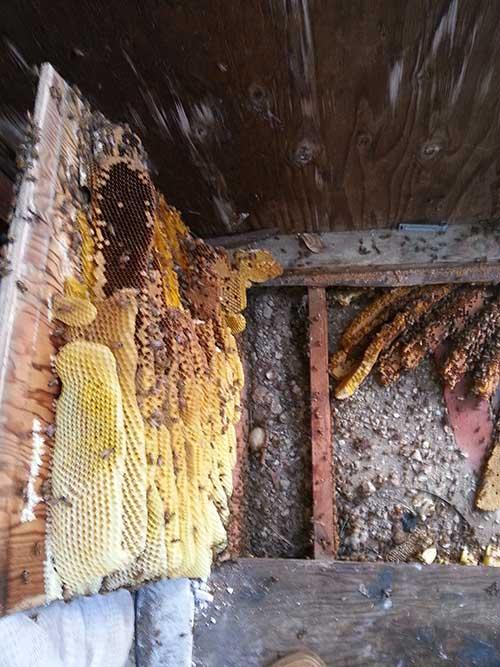 Beehive Removal Encinitas
