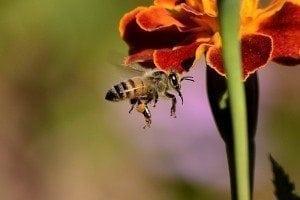 We Love Honeybees