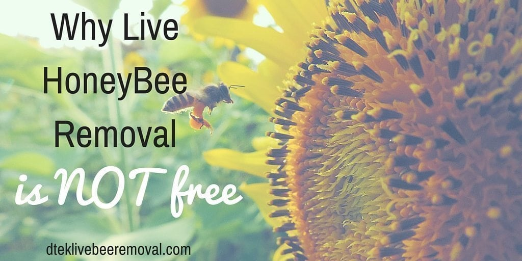 Why Live HoneyBee Removal Is Not Free