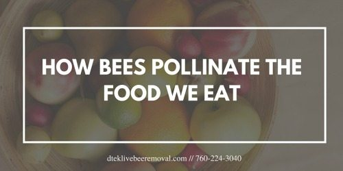HOW BEES POLLINATE THE FOOD WE EAT