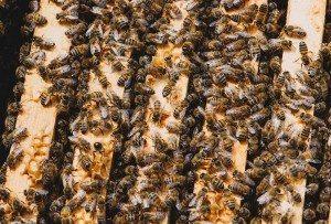 Beekeeper in San Diego