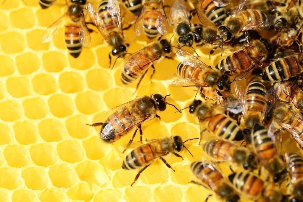 bee removal services vista ca