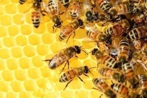 bee removal services vista ca