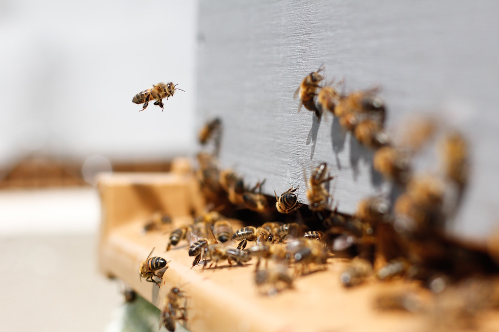 hiring the right bee removal company