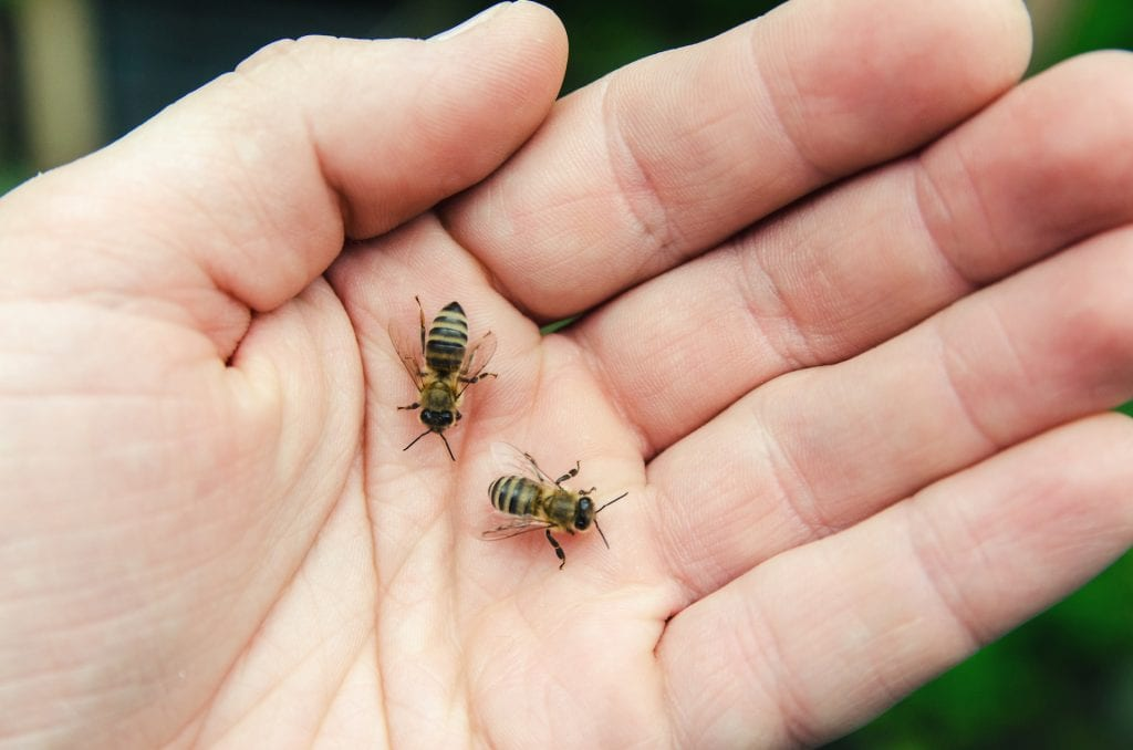 how to treat bee stings dtek live bee removal