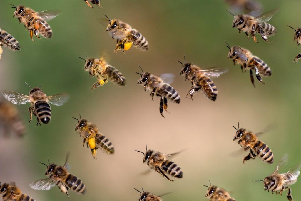 inhabitants of bee hive