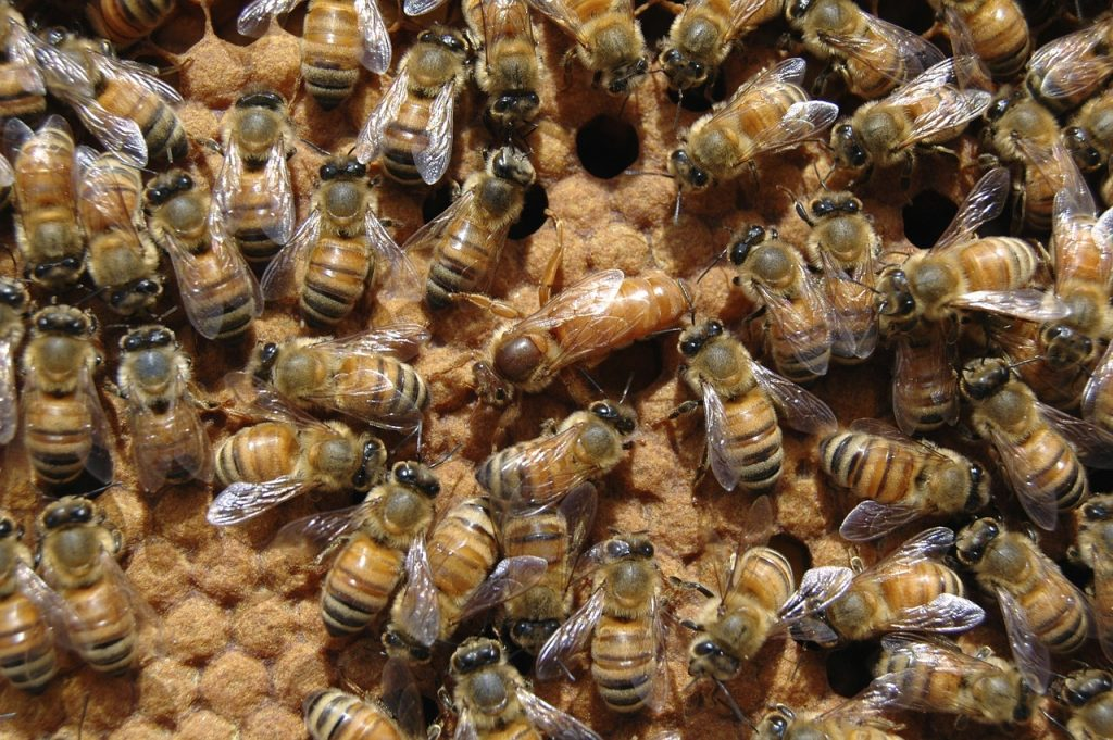 facts about queen bees