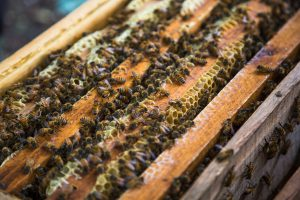 choosing bee removal companies