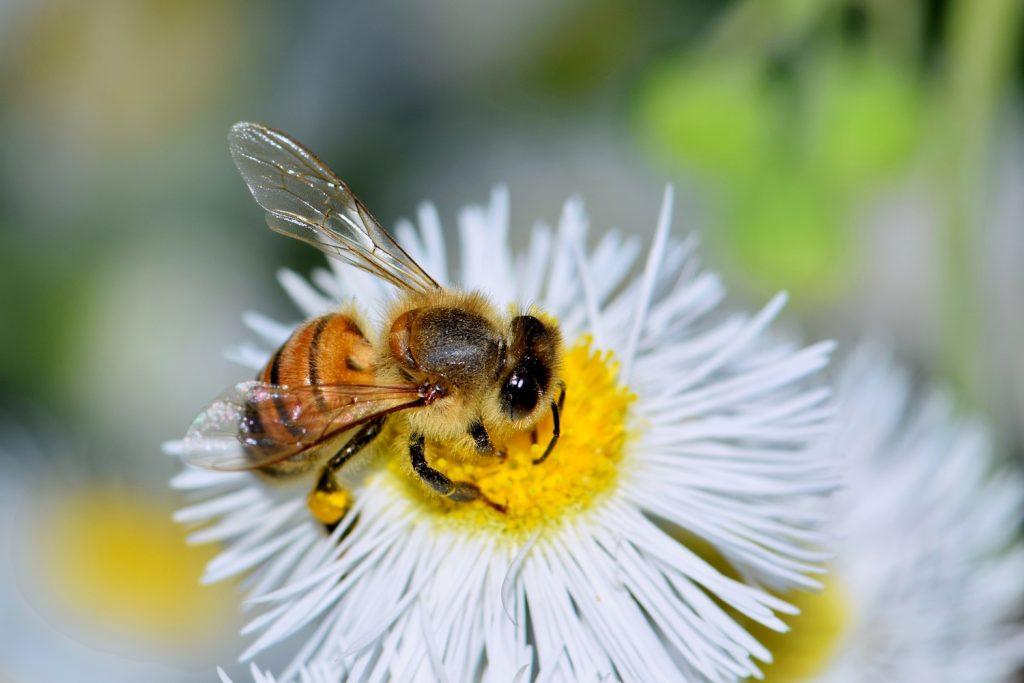 common bee phrases honey bee