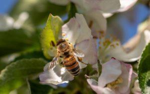do bees sleep