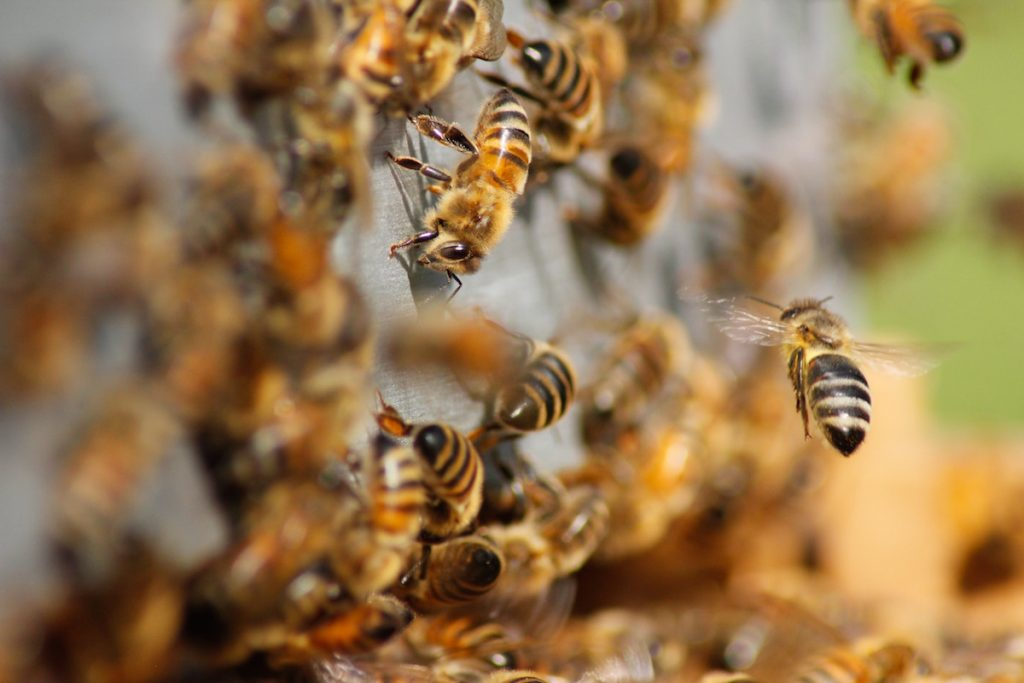 threats to bees