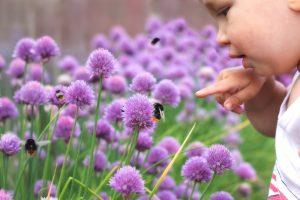 bees following human