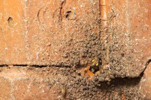 bee damage