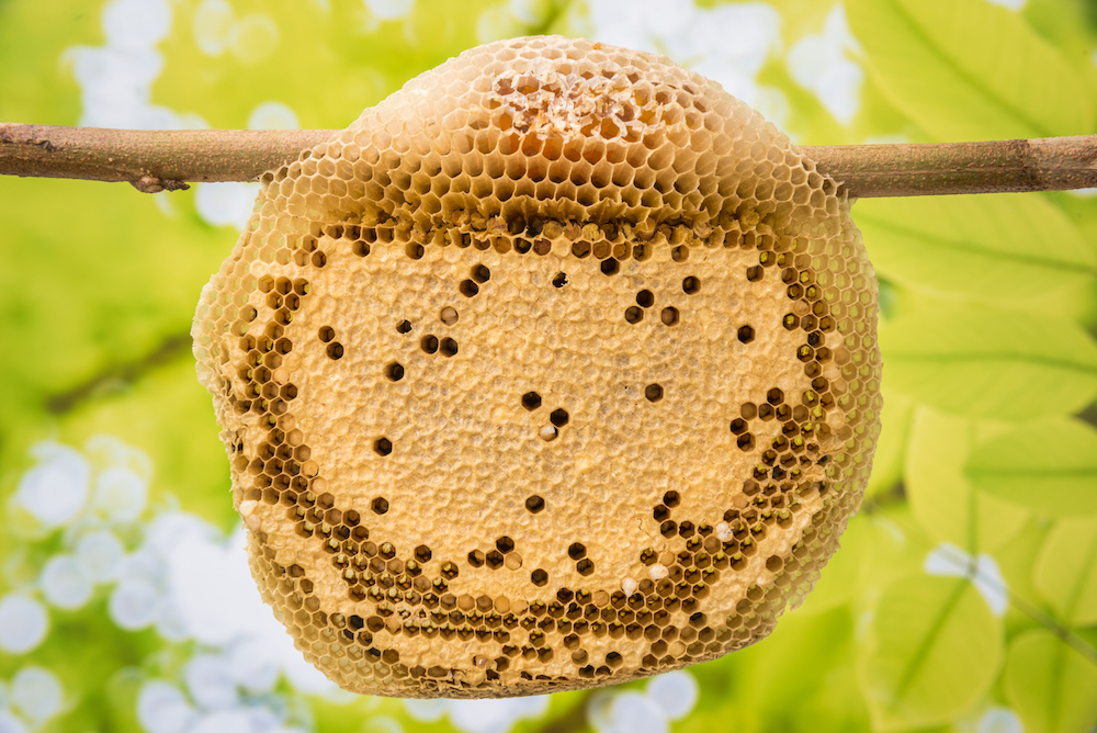 structure of beehive