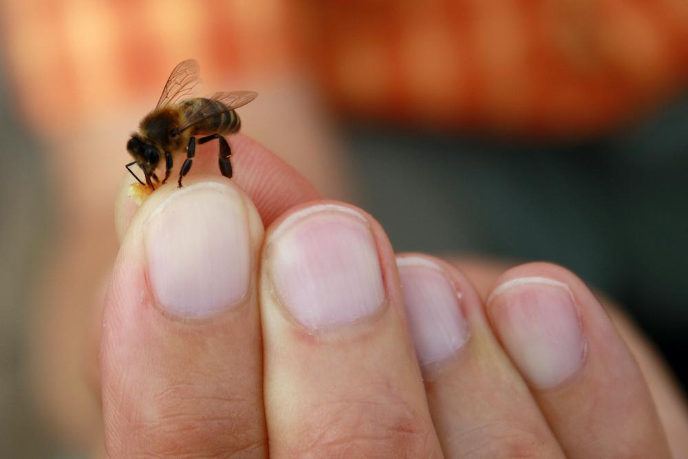 bee on hand