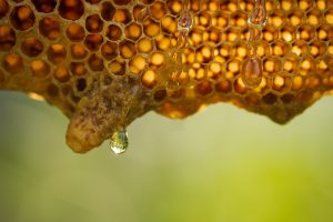 beehive cells