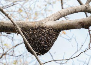 honey bees winter
