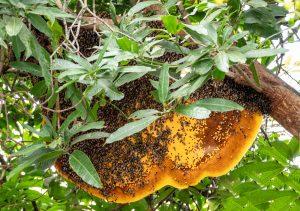 large hive
