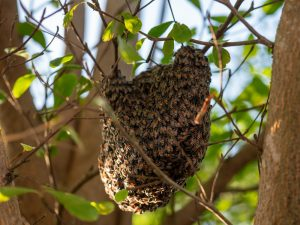 bee removal in san diego