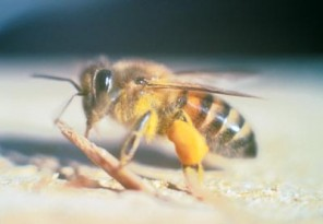 Bee Removal Temecula
