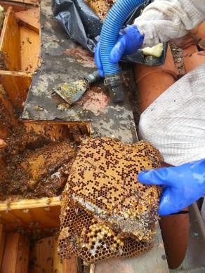 Bee Removal Rancho Santa Fe
