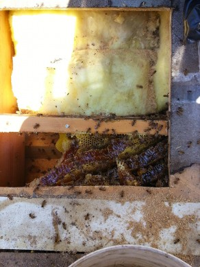 Bee Removal San Marcos Image