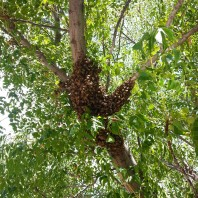 Bee Removal Poway