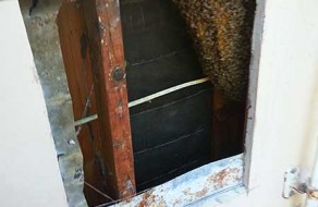Bee removal Solana Beach CA