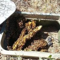 Bee Removal El Cajon