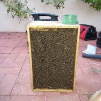 Bee Removal La Jolla CA