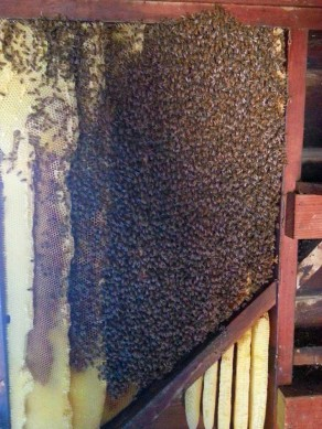 Bee Removal Scripps Ranch
