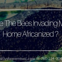 Are The Bees Invading Your Home Africanized ?