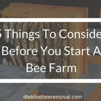 5 Things To Consider Before You Start A Bee Farm