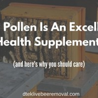 Bee Pollen : An Excellent Health Supplement & Why You Should Care